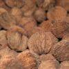 Black Walnuts in Shell